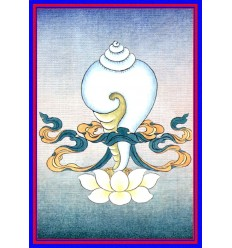 La conque desxtrogyre - Dakshinavarta-shankha